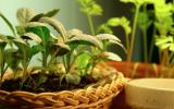 Inspiration att odla