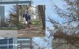 I gränslandet mellan stad och natur - vandring i Kista
